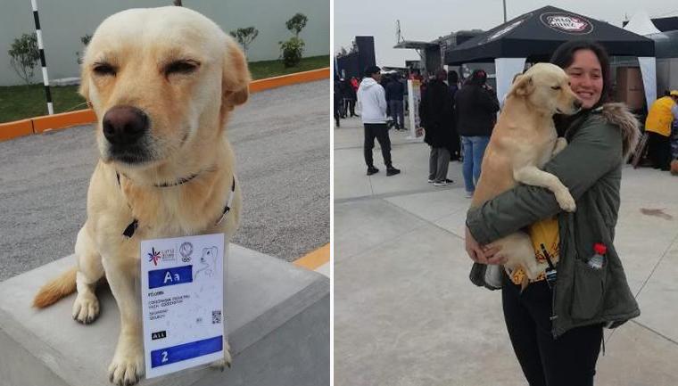 Cachorro credencial vigiar animar surfistas Pan-Americano