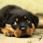 senado lei proíbe animais tratados coisas