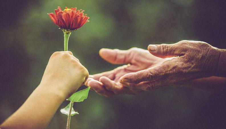criança dando flor pessoa mais velha