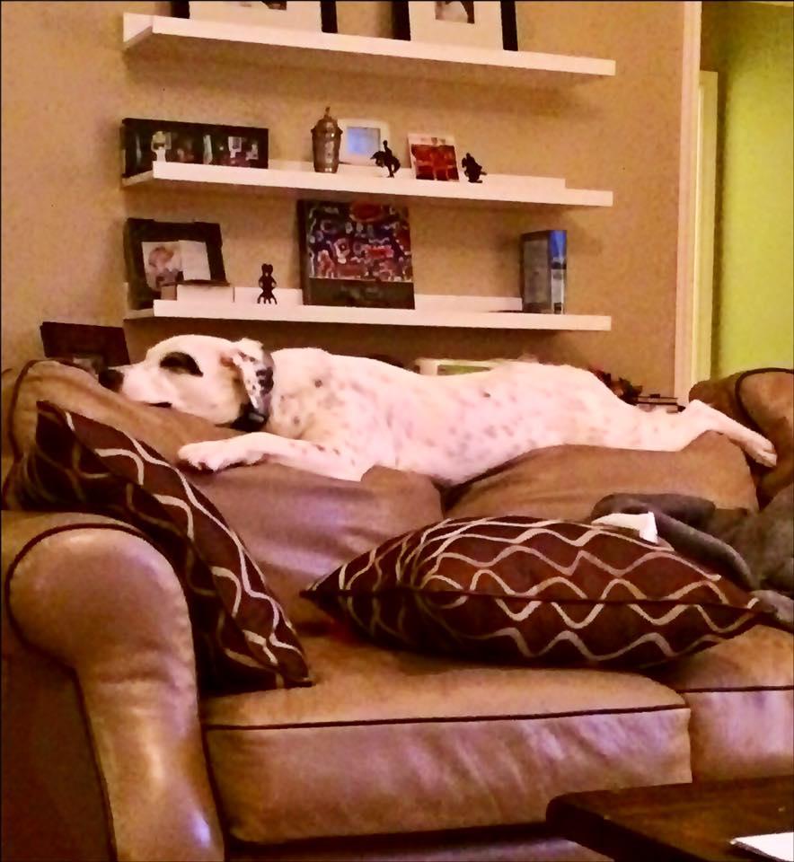 Cachorra abandonada carinhosa demais adotada por família tão amorosa quanto ela
