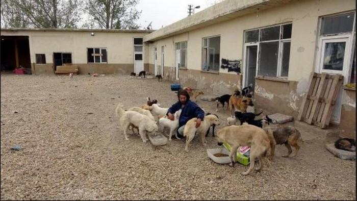 homem com cachorros abrigo