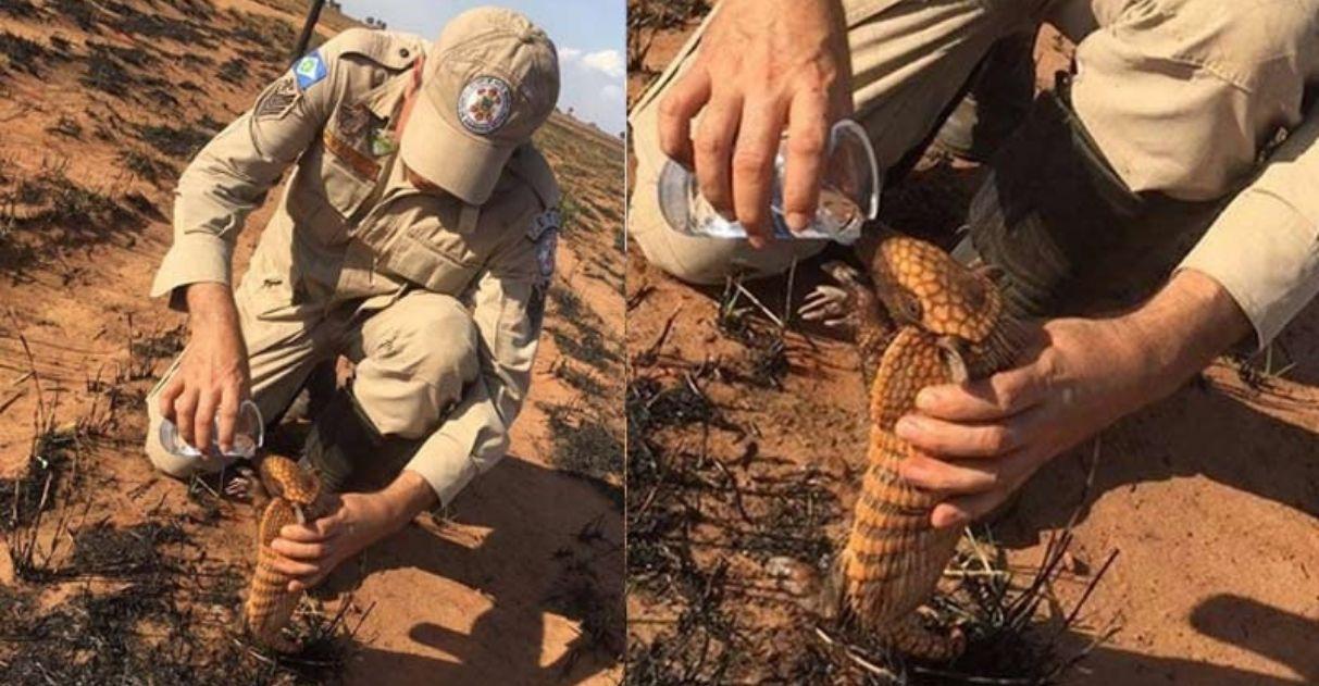 Bombeiro fornece água a filhote de tatu em floresta devastada por incêndio no MT