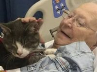 Amor gatinho cego ajuda idosa vencer tratamentos contra câncer