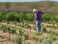 acesso água transformando comunidades semiárido