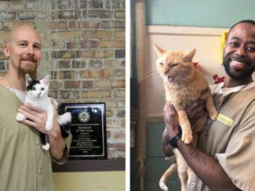 Prisão EUA aceita gatos abrigo transforma vidas prisioneiros