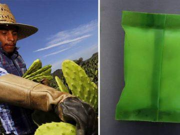 Mexicana cria plástico biodegradável feito cacto substituir sacolas
