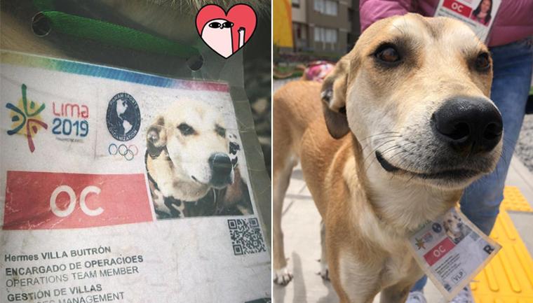 cachorro com credencial pan-americano lima 2019