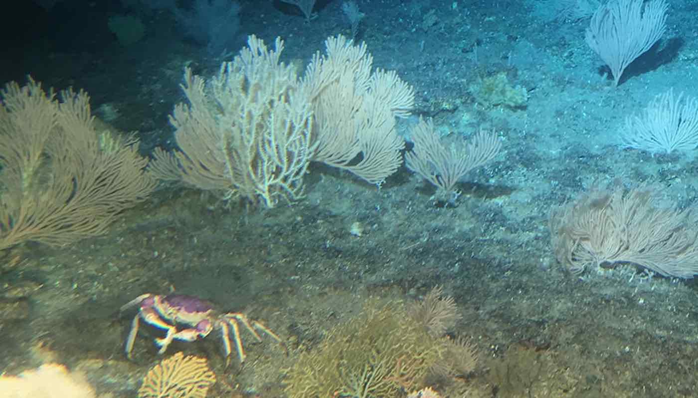 Após décadas proteção zelo recifes corais havaianos retornam antiga glória