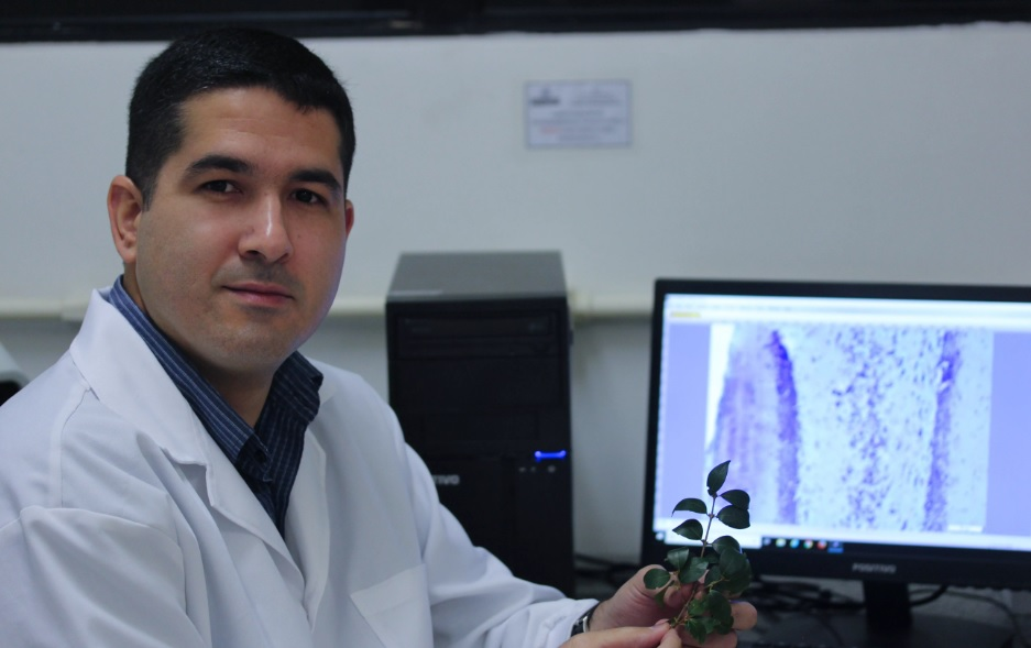 pesquisador folha pitangueira