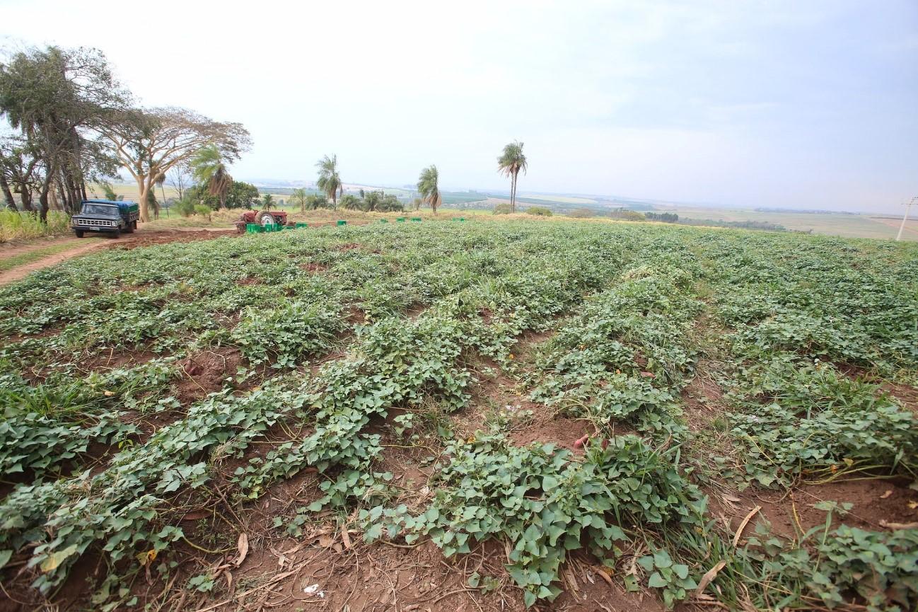 nestlé cria papinhas orgânicas com apoio de pequenos produtores