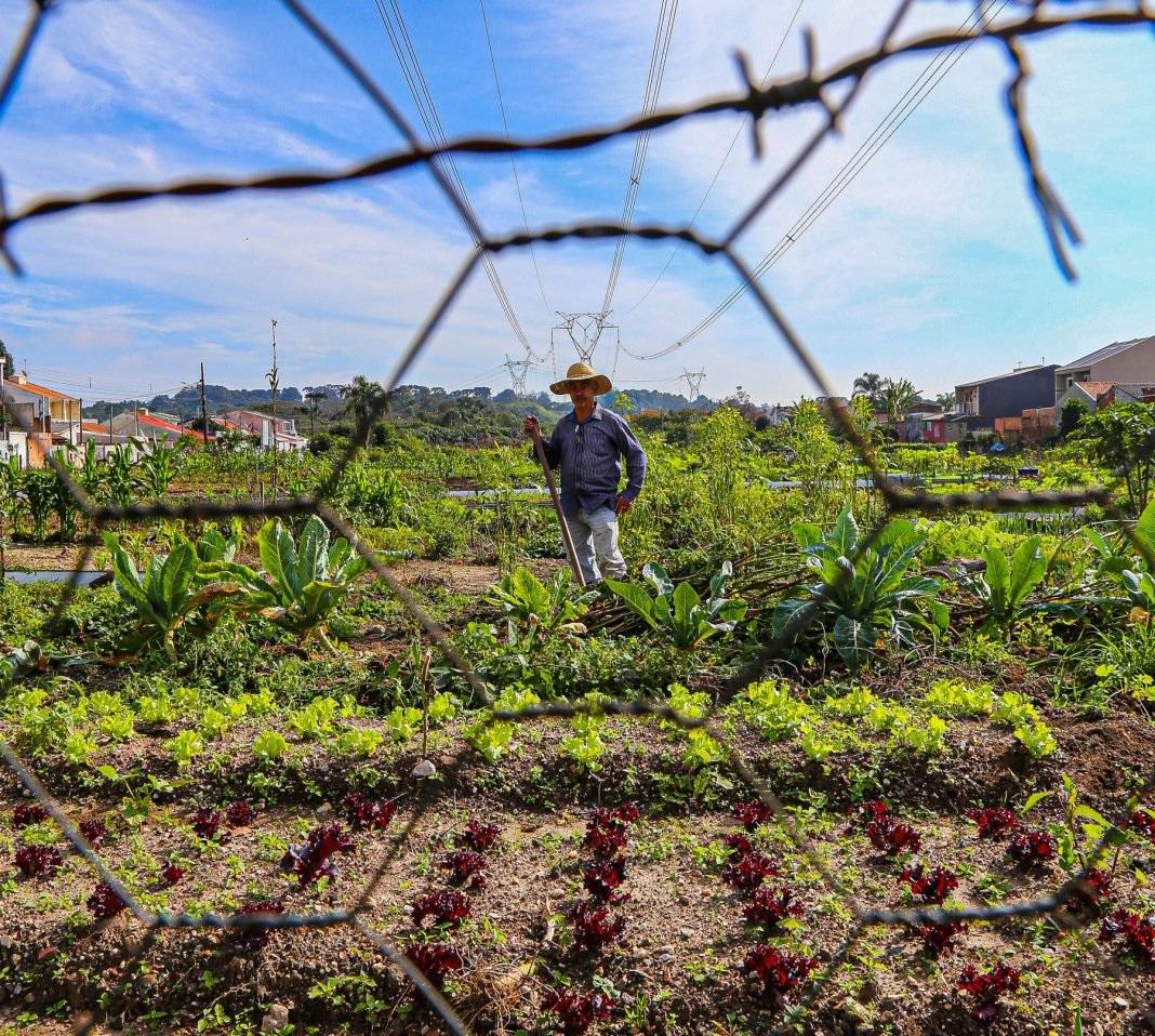 Horta urbana comunitária beneficia centenas pessoas em Curitiba