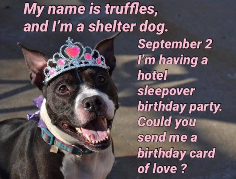 Cachorrinha idosa abrigo festa aniversário