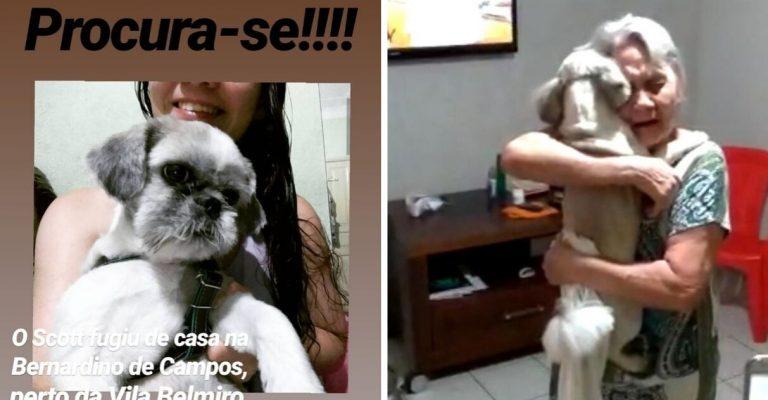 Idosa emociona reencontro cachorro perdido