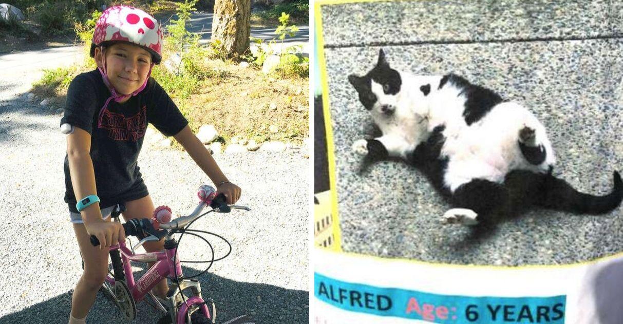 Menina encontra gato desaparecido detetive do bairro