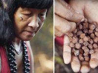 Ação liderada por mulheres indígenas já plantou mais de 1 milhão de árvores no MT 12
