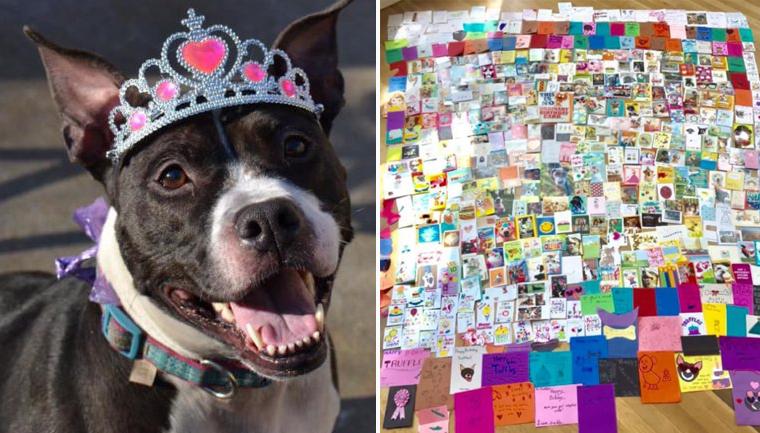 Cachorra idosa devolvida a abrigo ganha festa de aniversário e recebe cartões do mundo inteiro 2