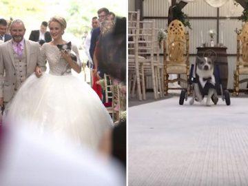 Noiva se casa na companhia dos oito cães com deficiência que resgatou - veja vídeo 1