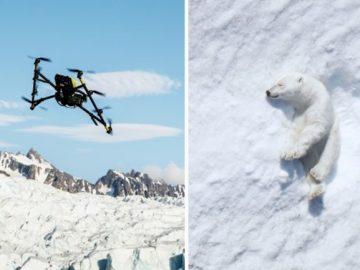 De ursos polares a baleias: Intel expande pesquisa sobre a vida selvagem com drones e IA 5