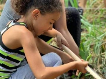 Belo Horizonte ganha agrofloresta urbana comunitária