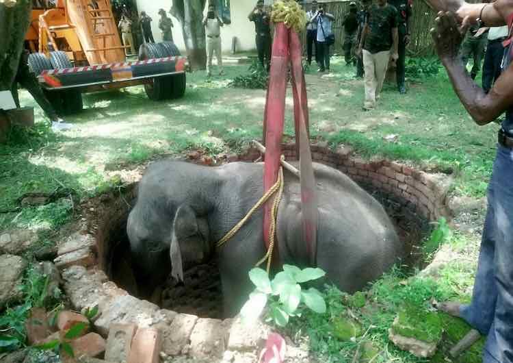 resgate elefante preso poço 6 metros profundidade