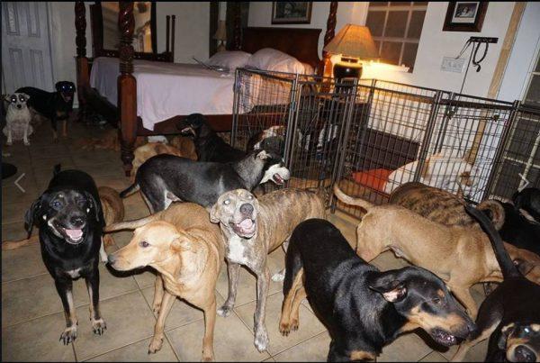 cachorros dentro quarto