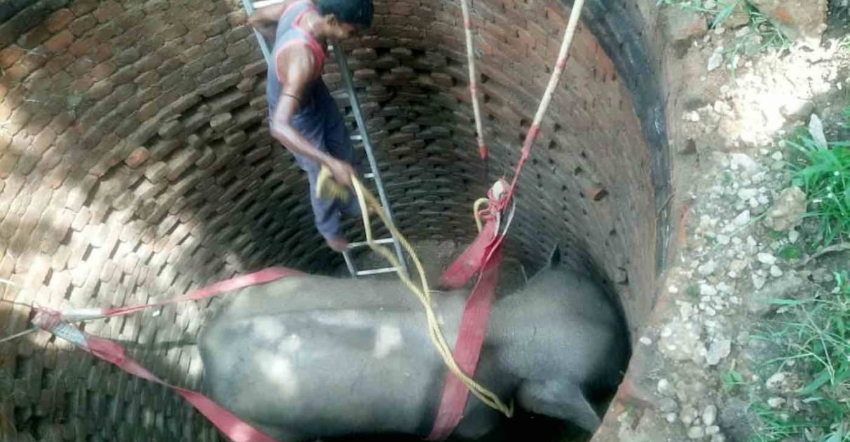 homem retirando elefante preso poço 6 metros profundidade