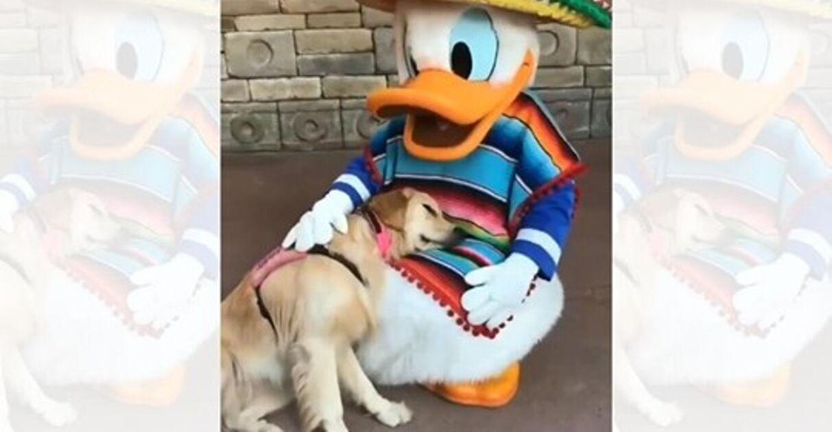 Vídeo viral cachorrinha cachorro conhece Pato Donald