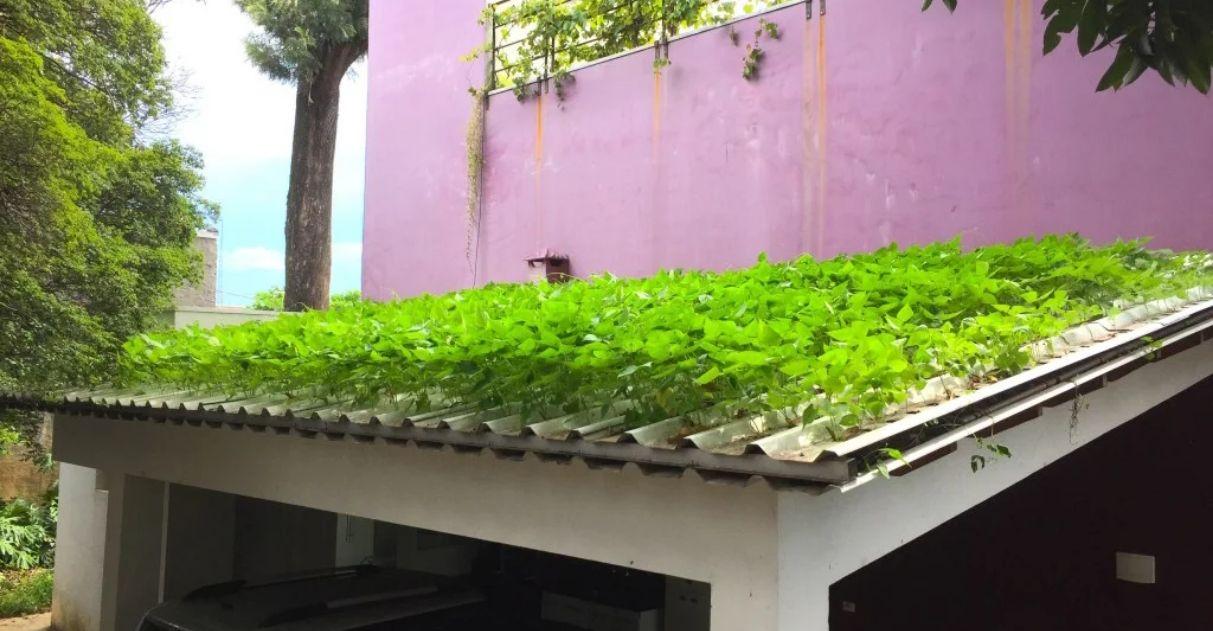 telha hidropônica com vegetais
