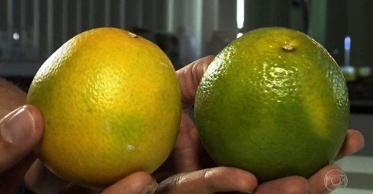 Cientistas usam cera de carnaúba para aumentar durabilidade das frutas