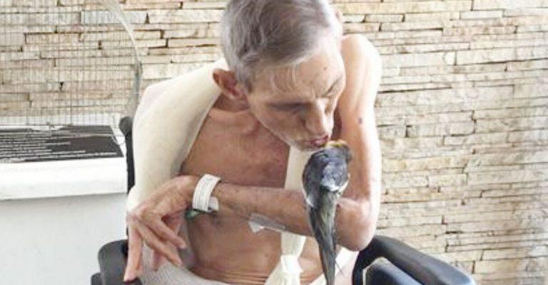 Idoso hospitalizado visita calopsita