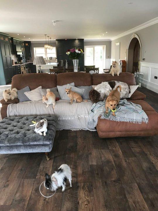 Noiva casa companhia cães com deficiência resgatou