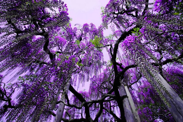 Árvore mais bonita em incrível do mundo Japão
