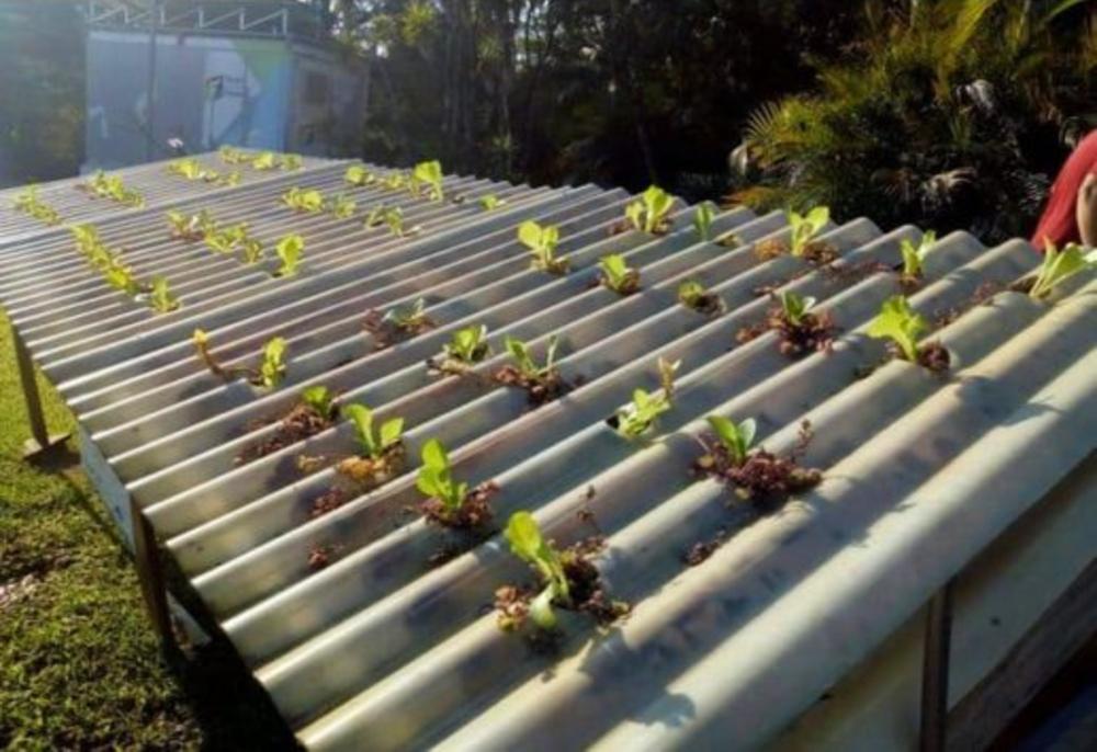 Agrônomo brasileiro desenvolve primeira telha hidropônica para cultivo do mundo