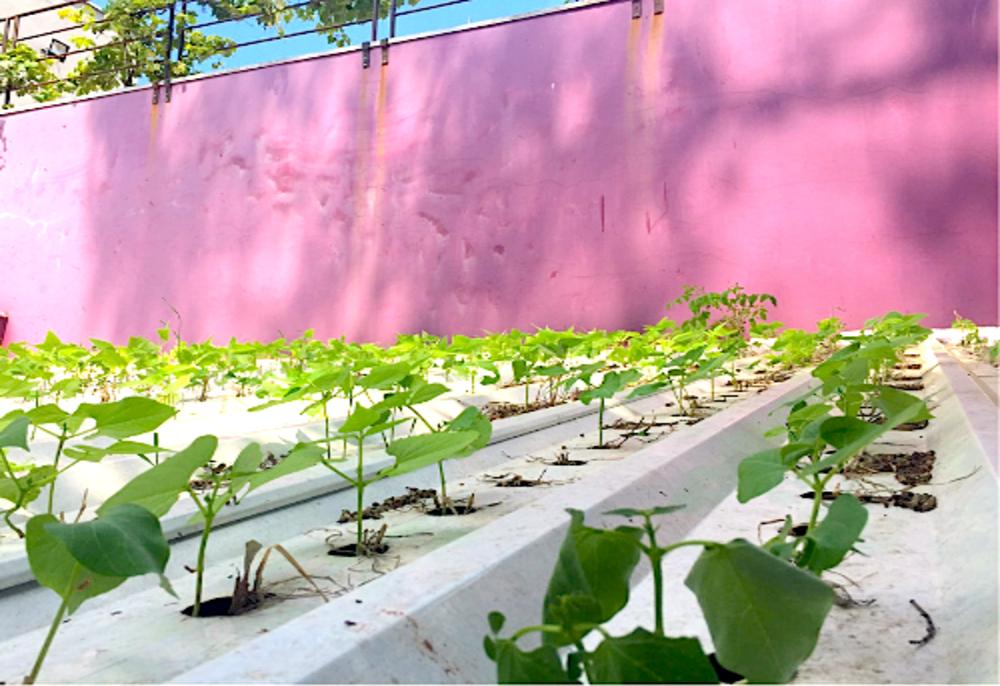 telha hidropônica com mudas plantas