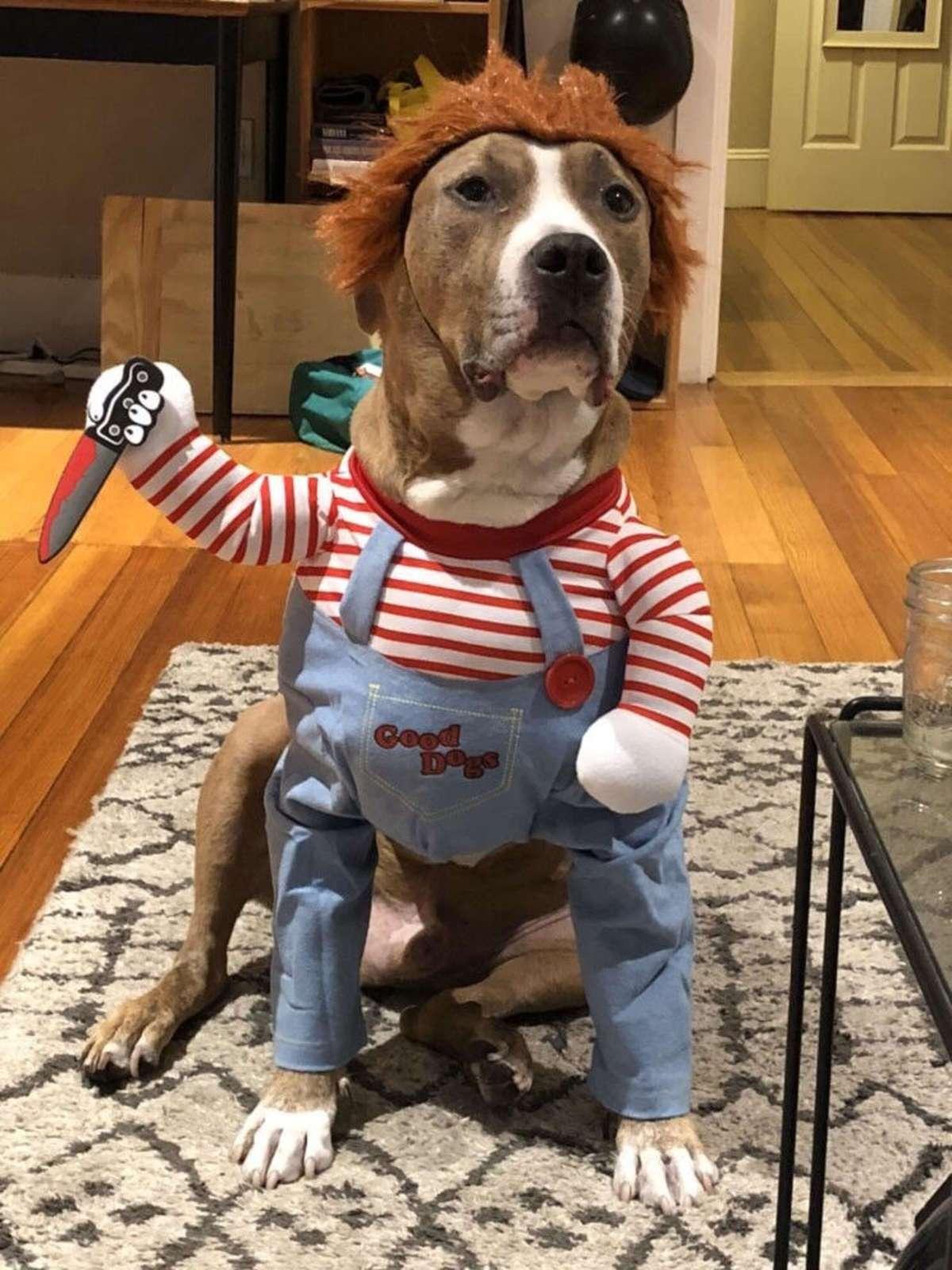 Cãozinho fantasia assustadora Halloween