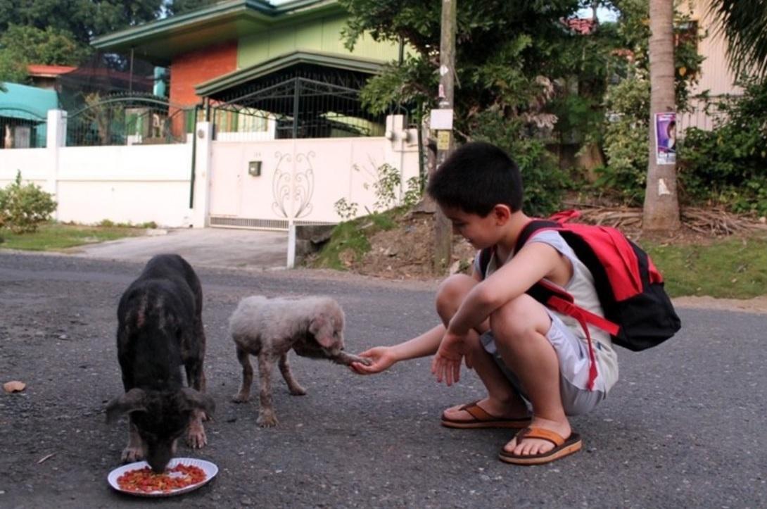 Menino que gasta economias com comida para cães de rua