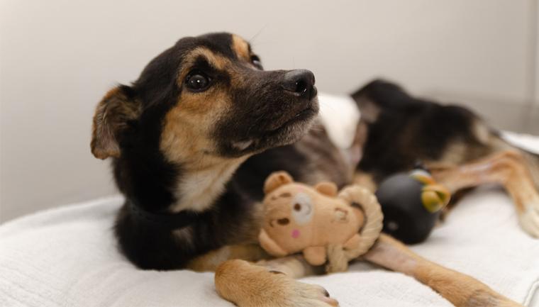 cãozinho com ursinho pelúcia