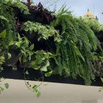 Ponto de ônibus ganha jardim suspenso em Salvador: 125m² de teto verde! 3
