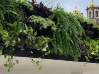 Ponto de ônibus ganha jardim suspenso em Salvador: 125m² de teto verde! 11
