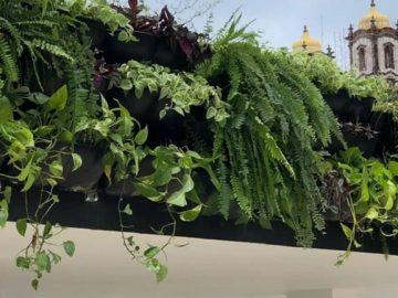 Ponto de ônibus ganha jardim suspenso em Salvador: 125m² de teto verde! 1