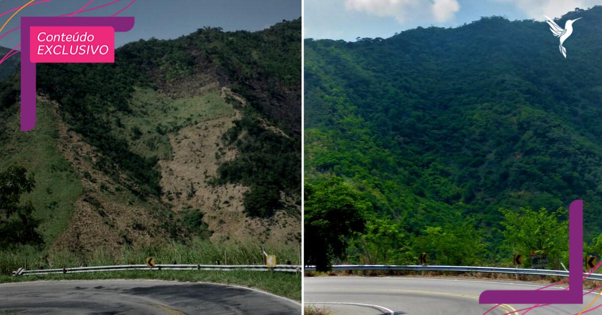 Instituto fundado por jovem planta 2 milhões de árvores e refloresta área desmatada no RJ