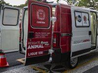 Ambulância para resgatar cães e gatos em risco nas ruas começa a operar em Curitiba 4
