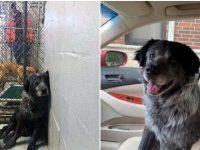 Cãozinho que foi atropelado não consegue parar de sorrir após finalmente ser adotado 6