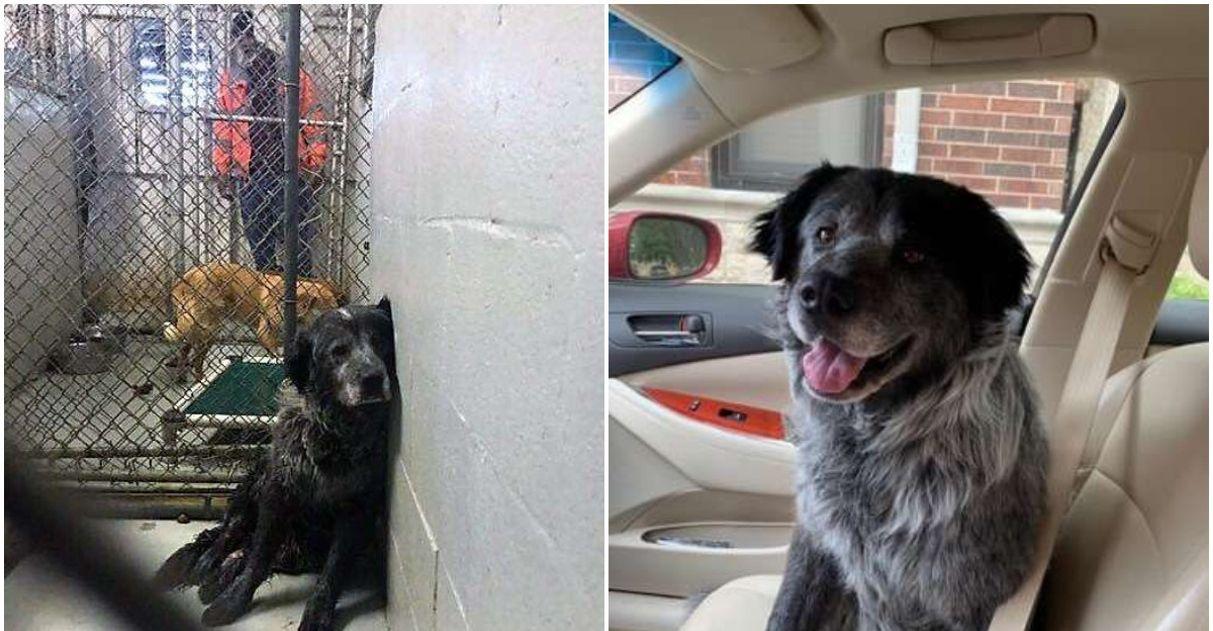 Cãozinho que foi atropelado não consegue parar de sorrir após finalmente ser adotado 1