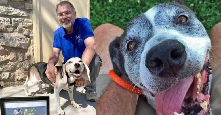 Homem abre orfanato cães velhinhos idosos abandonados