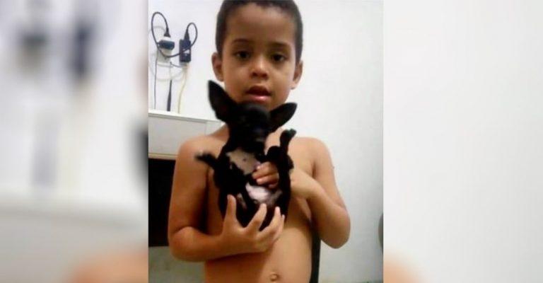 Criança quebra cofrinho para quem achar cão perdido