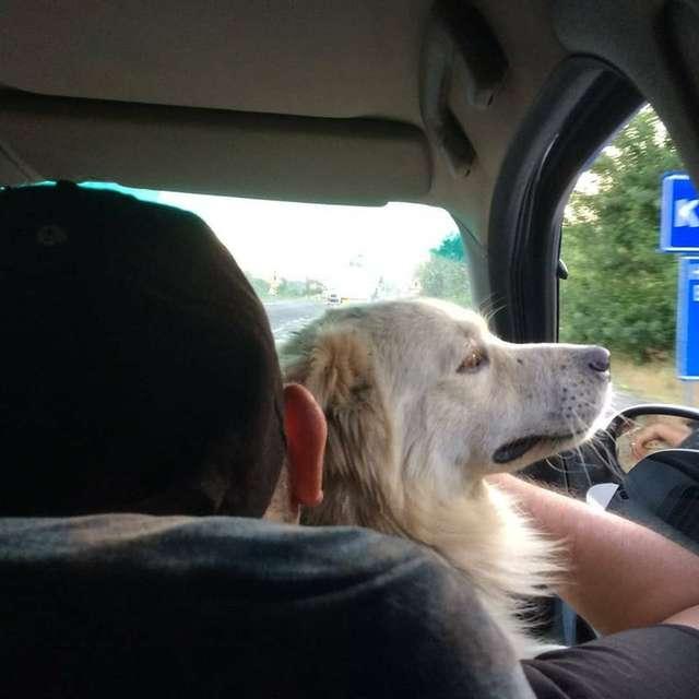 Cachorro perdido reencontro família