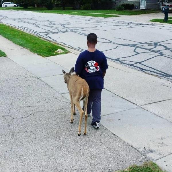 menino ajuda cervo procurar comida