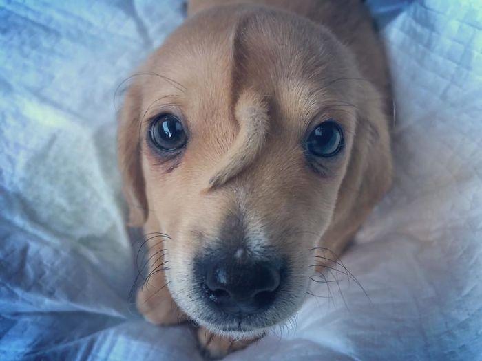cachorro cauda testa apelidado cão unicórnio
