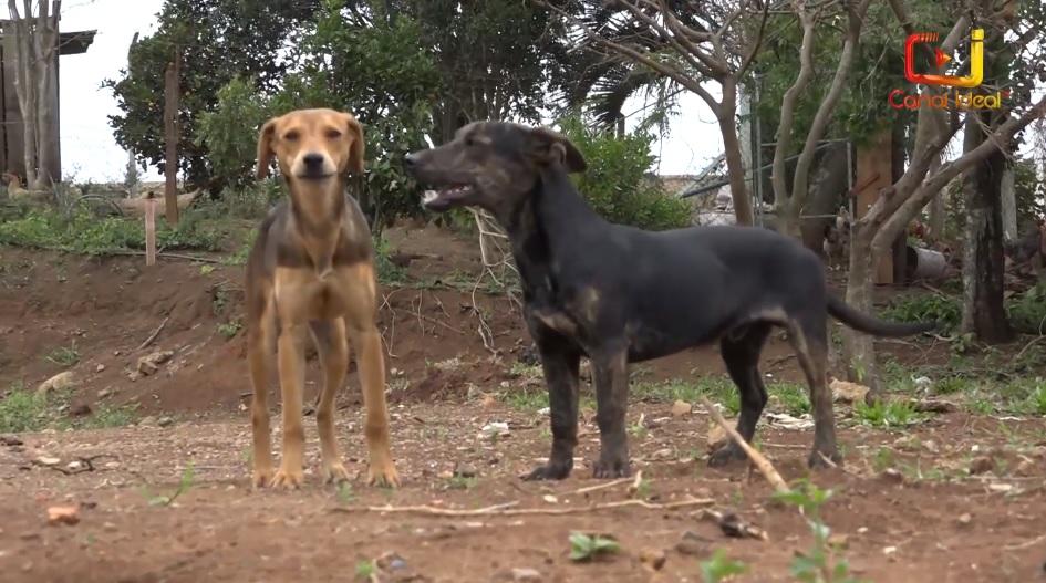casinhas para cães famílias carentes